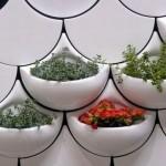 en yeni dekoratif saksı çeşitleri