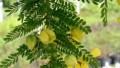 Yemyeşil bitkilerden güzellik elde edin