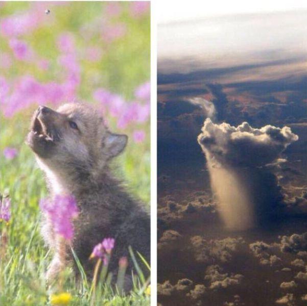 Bulutlar köpekciği taklit ediyor