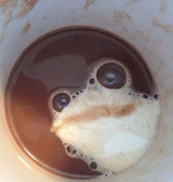 Fincandaki kurbağa bu gerçek olamaz